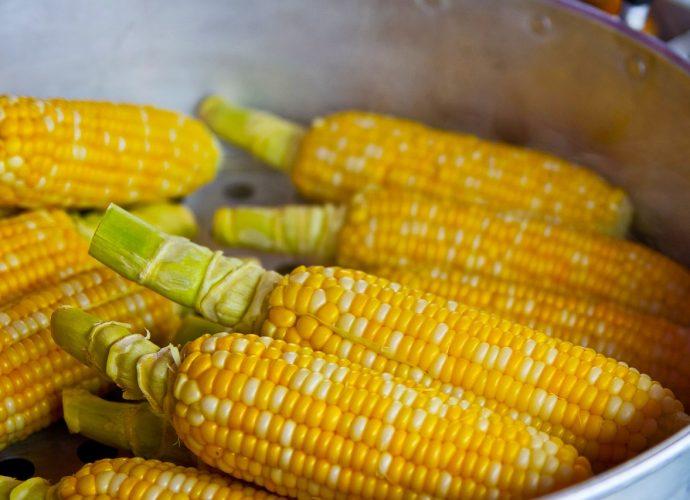 Kiszonka z kukurydzy: usługi profesjonalistów